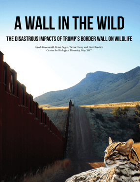 A Wall in the Wild: The Disastrous Impacts of Trump's Border Wall on Wildlife